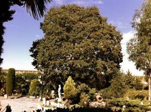 Foto del jardín de las cavas Rezach Baqués