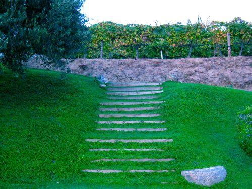 Acceso a los viñedos de Can Boquet