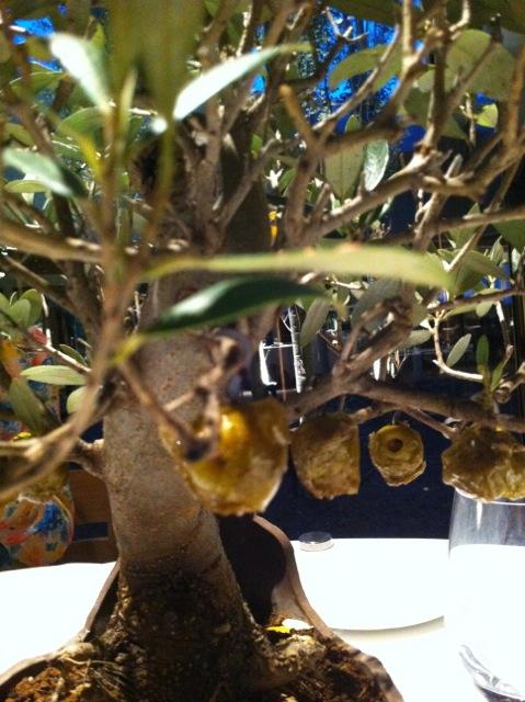 Foto Bonsai con olivas caramelizadas (Comida el mundo)