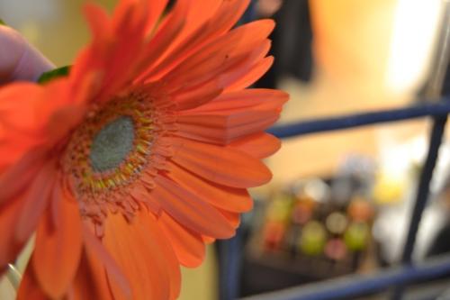 Taller de Tapas para Orange en Ingracia